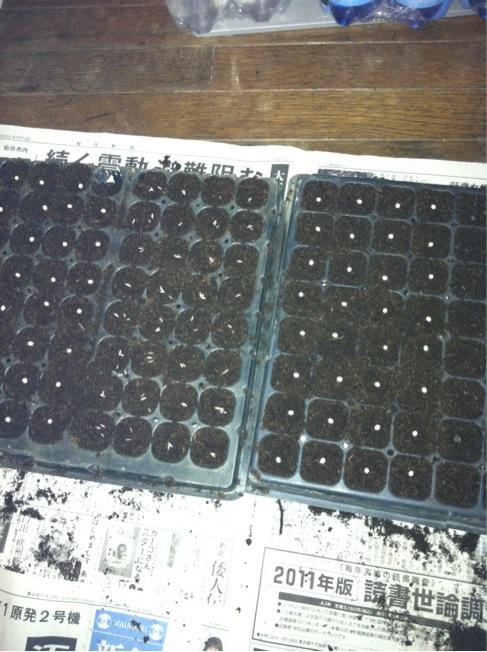 パレットに播種・・・_c0222448_1865576.jpg
