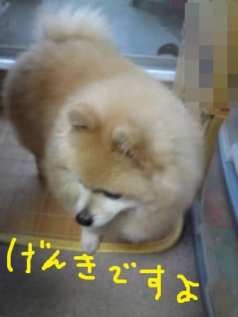 d0177473_2010939.jpg