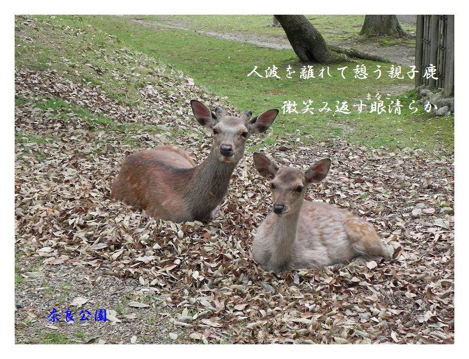 「夏を詠む」 夏の短歌2011 (2012)_c0187781_6465989.jpg