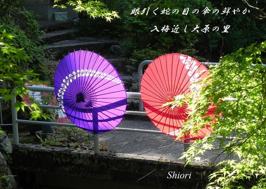 「夏を詠む」 夏の短歌2011 (2012)_c0187781_9335522.jpg