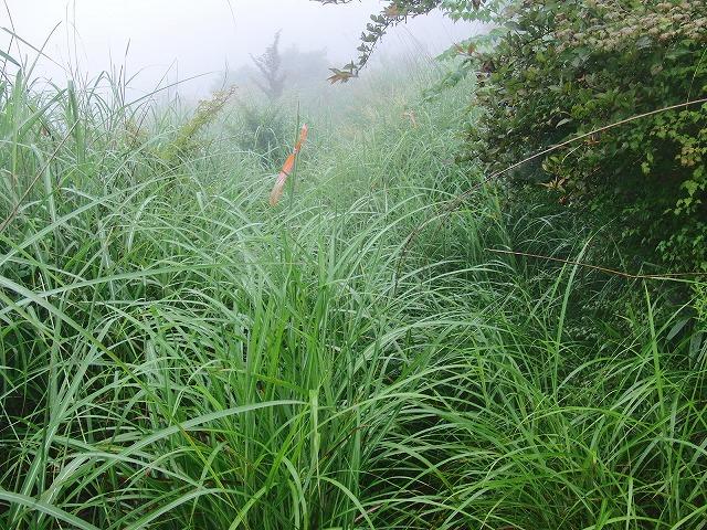 東京から多くの人が参加する富士山国有林の下草刈り_f0141310_7484765.jpg