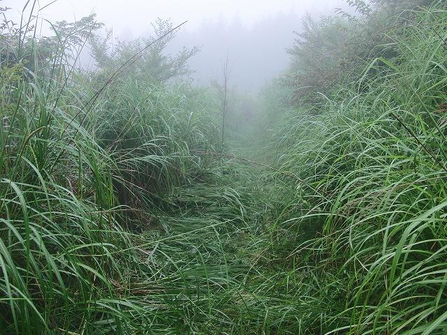 東京から多くの人が参加する富士山国有林の下草刈り_f0141310_748579.jpg