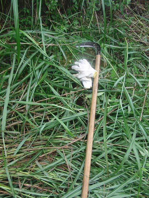 東京から多くの人が参加する富士山国有林の下草刈り_f0141310_7491245.jpg