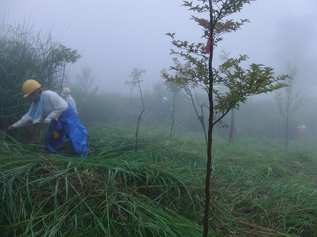 東京から多くの人が参加する富士山国有林の下草刈り_f0141310_7495222.jpg