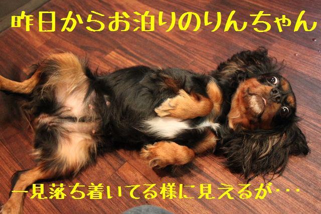b0130018_931725.jpg