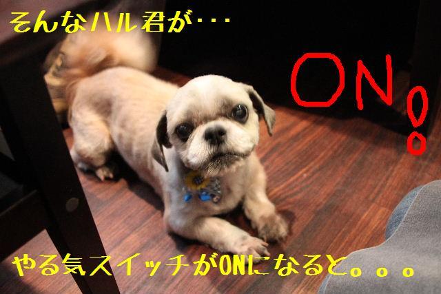 b0130018_951976.jpg