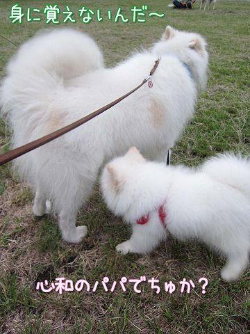 サモベビー心和ちゃん_c0062832_310076.jpg