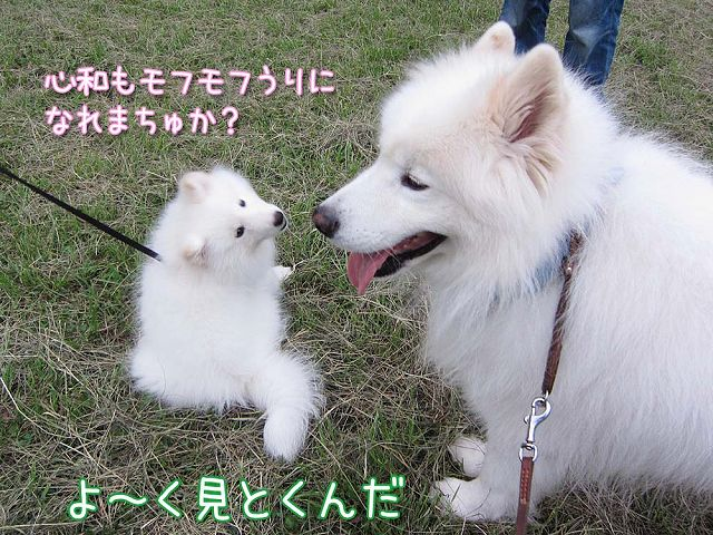 サモベビー心和ちゃん_c0062832_3101293.jpg