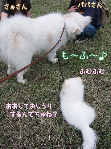 サモベビー心和ちゃん_c0062832_3102657.jpg