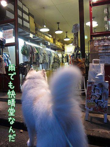 サモベビー心和ちゃん_c0062832_392149.jpg