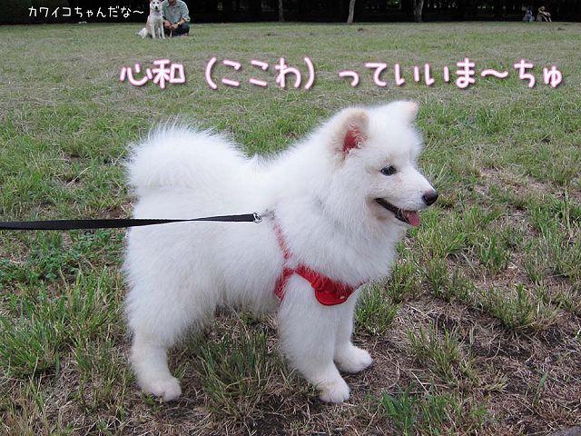 サモベビー心和ちゃん_c0062832_394810.jpg