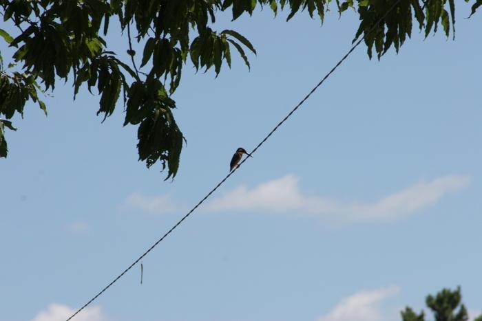 過去の写真 雷鳥 カワセミ初撮り_a0203733_125672.jpg