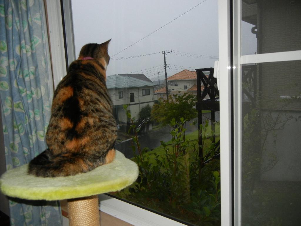 2011年8月22日(月)雨の寝曜日!_f0060461_9101146.jpg