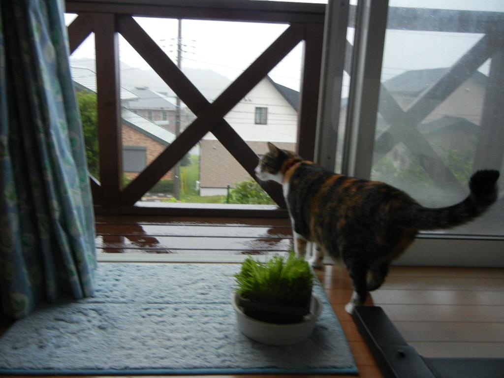 2011年8月22日(月)雨の寝曜日!_f0060461_9115071.jpg