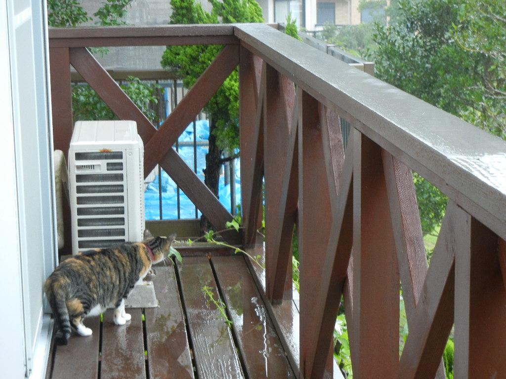 2011年8月22日(月)雨の寝曜日!_f0060461_9123946.jpg