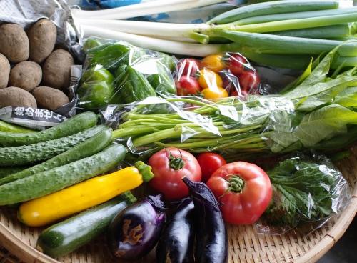 今週の野菜セット(8/23~8/27着)_c0110869_23811.jpg