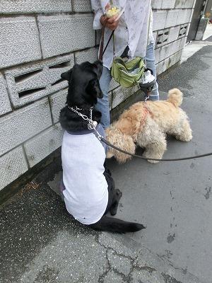 お友達に逢えない雨の日・・・_e0222588_16261668.jpg