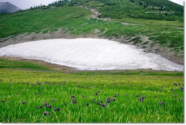 白馬でキャンプ と 白馬大池登山!_f0179404_21554567.jpg
