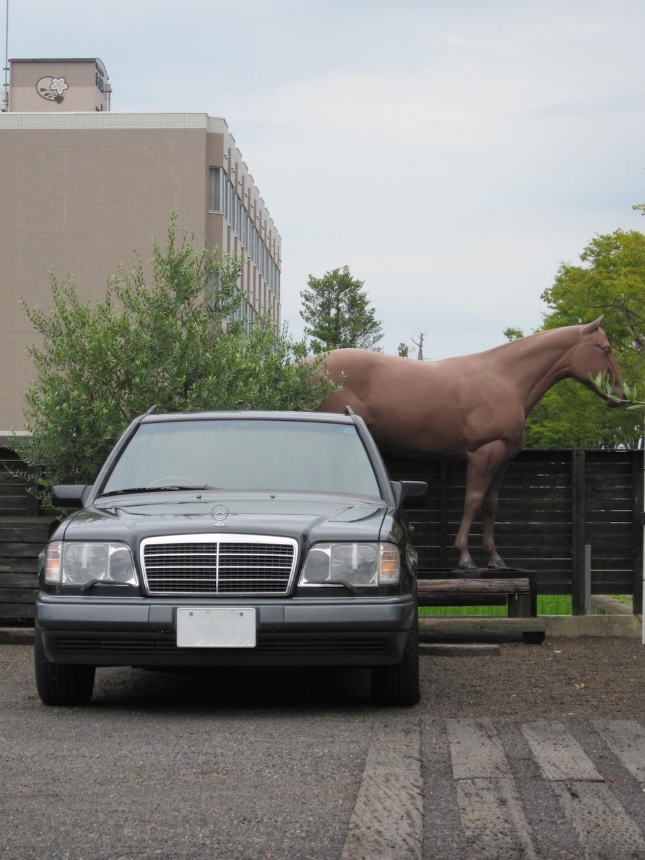 馬とW124_d0081605_2331122.jpg