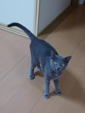 猫のお友だち 銀くん編。_a0143140_2333733.jpg