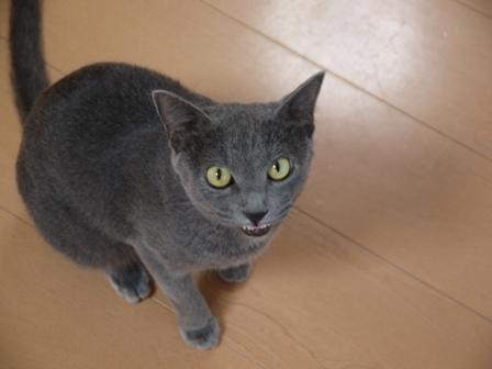 猫のお友だち 銀くん編。_a0143140_2345985.jpg