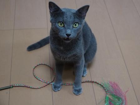 猫のお友だち 銀くん編。_a0143140_2362655.jpg