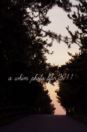 a0180146_19342723.jpg