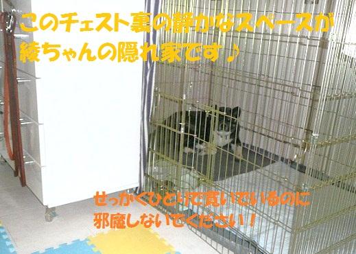 f0121712_5212038.jpg