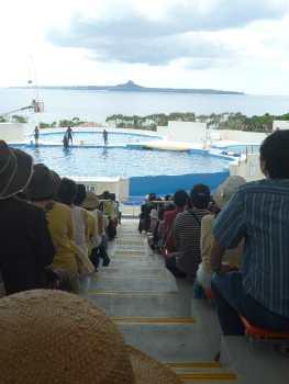 美ら海水族館とフクギ並木_f0208315_10291528.jpg