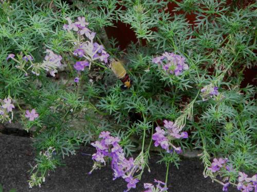 庭の客たち_d0150720_5461983.jpg