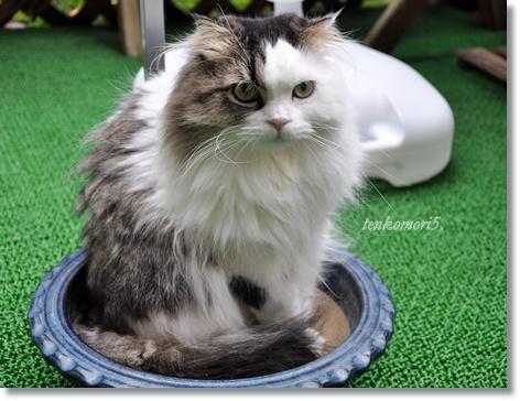 8/24  鉢猫。_c0116921_2322666.jpg