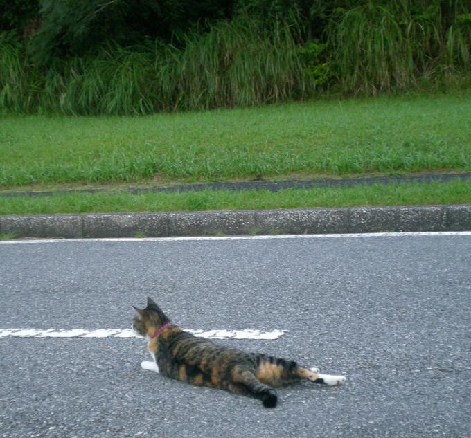 2011年8月24日(水)心ちゃんが山の中へ~!_f0060461_15112451.jpg