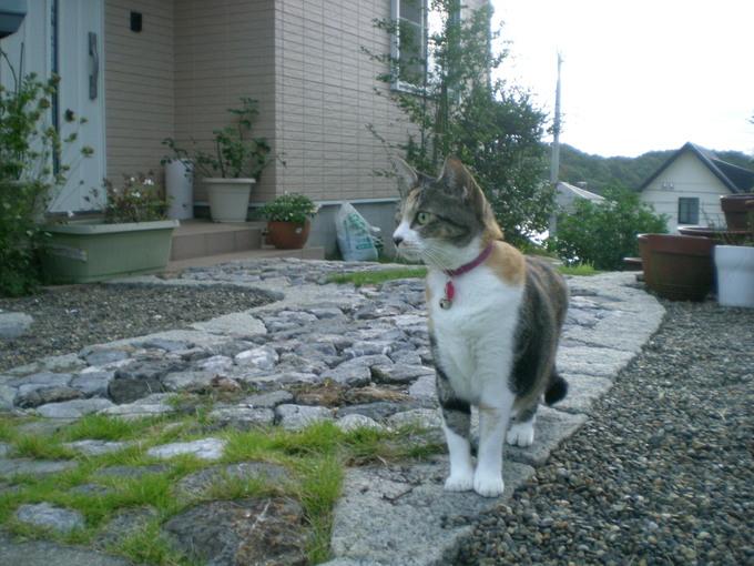 2011年8月24日(水)心ちゃんが山の中へ~!_f0060461_1593714.jpg
