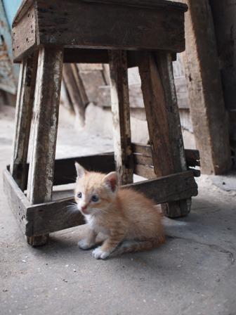 市場の猫ちゃん☆2011年夏旅行より_b0207873_1529568.jpg
