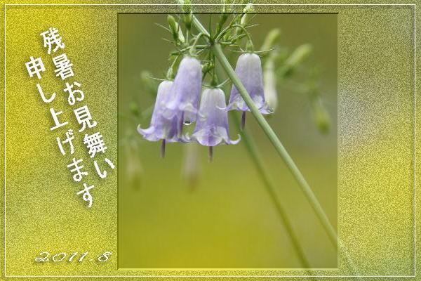 f0164592_6575243.jpg