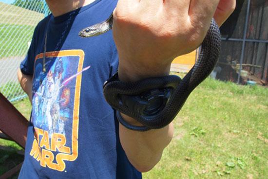 ヘビ臭い_e0235910_7171219.jpg