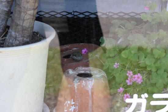 ヘビ臭い_e0235910_735176.jpg