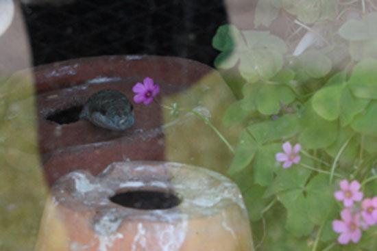 ヘビ臭い_e0235910_743632.jpg