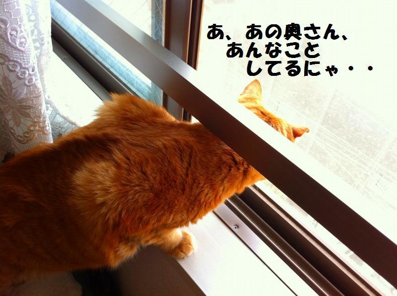 a0147921_1828324.jpg