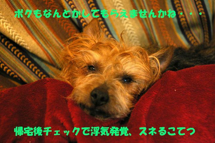 c0004744_15204360.jpg