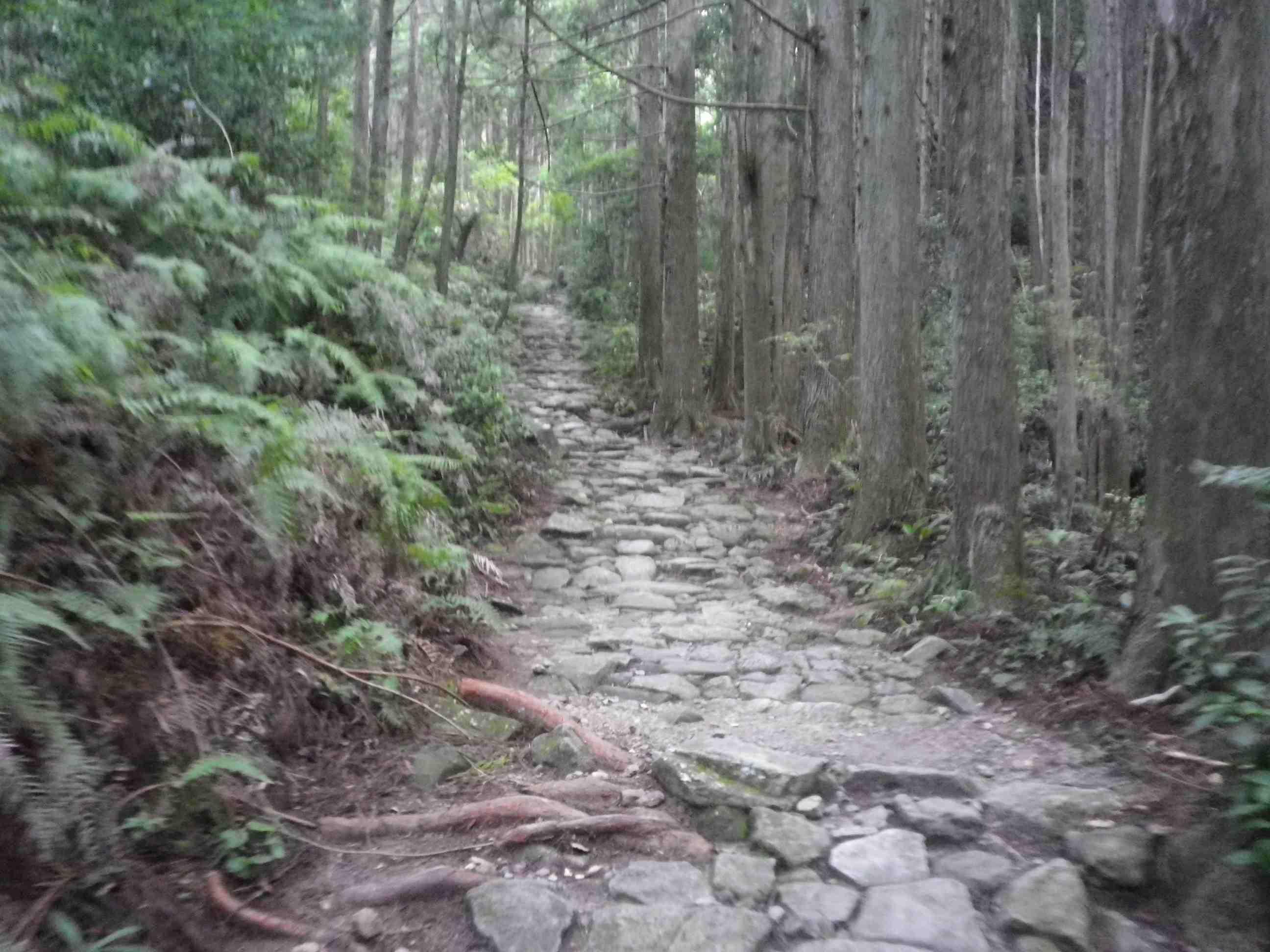 世界遺産熊野古道(馬越峠/天狗倉山)より_d0157745_23443333.jpg