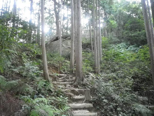 世界遺産熊野古道(馬越峠/天狗倉山)より_d0157745_23455983.jpg