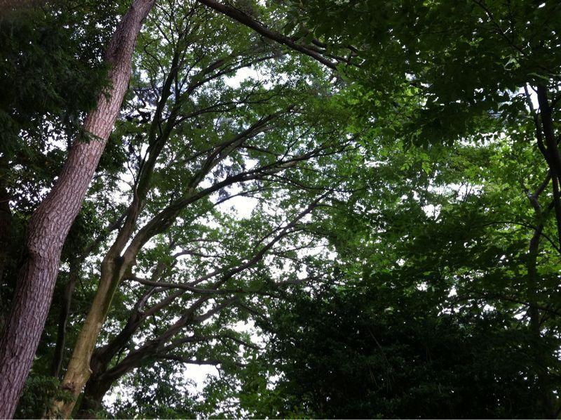 夕暮れの金沢城址公園_c0110051_1623731.jpg