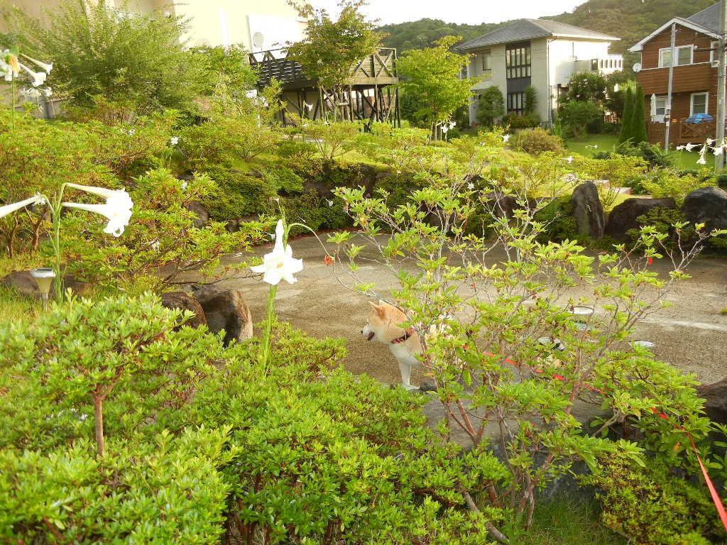 2011年8月25日(木)心ちゃん、今日はお部屋に!_f0060461_1554019.jpg