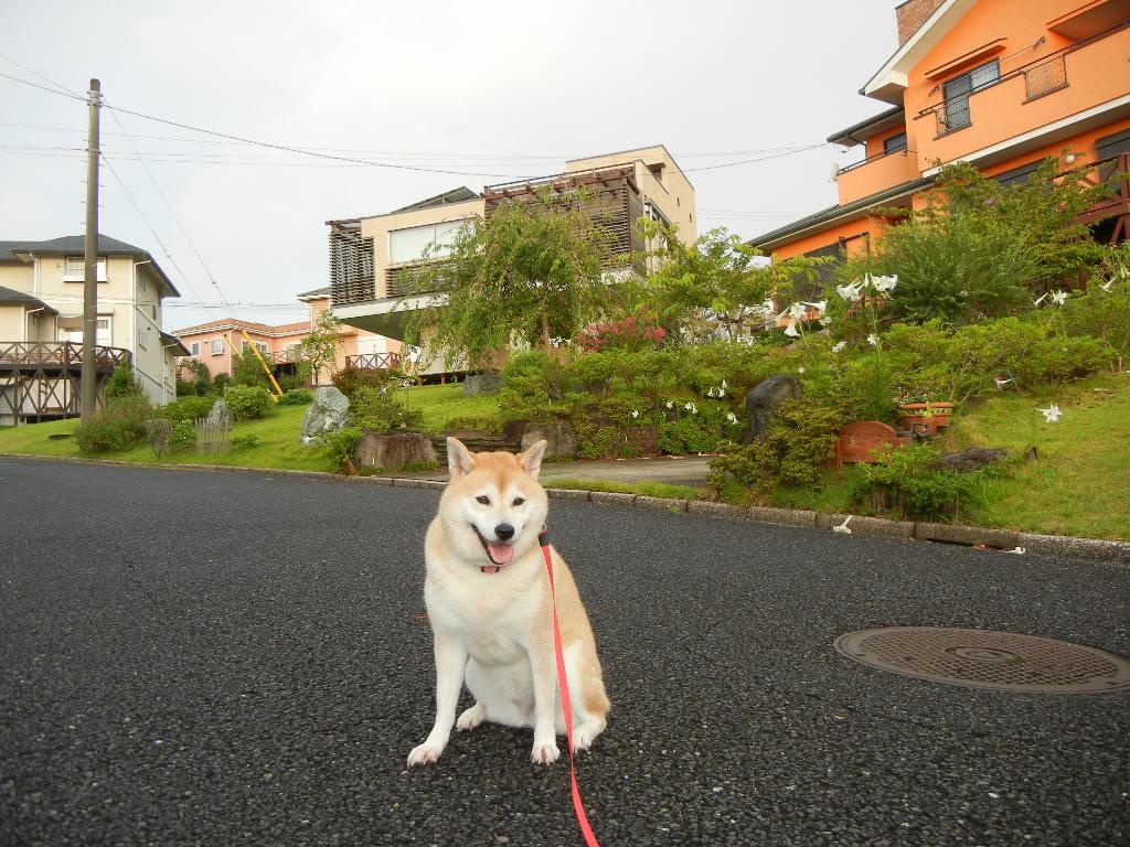 2011年8月25日(木)心ちゃん、今日はお部屋に!_f0060461_15554930.jpg
