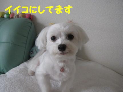 b0193480_1534532.jpg