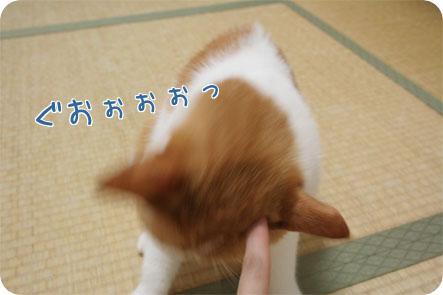 f0172285_20111393.jpg