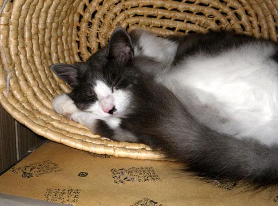 とりとめもなく、この頃の猫のことなど(^^)_a0136293_1551428.jpg