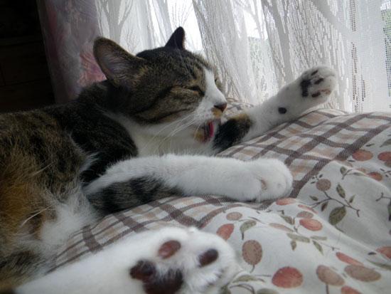 とりとめもなく、この頃の猫のことなど(^^)_a0136293_15545934.jpg