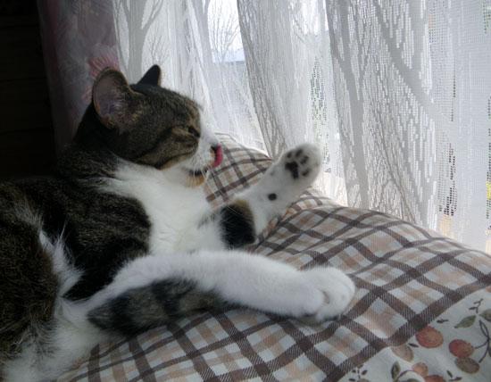 とりとめもなく、この頃の猫のことなど(^^)_a0136293_1610393.jpg